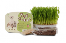 Rumput Vitamin Anjing & Kucing Green Pett Pet Grass 180gr